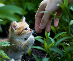 cat, cutee, and free image