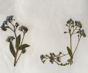 flower and forget me not image