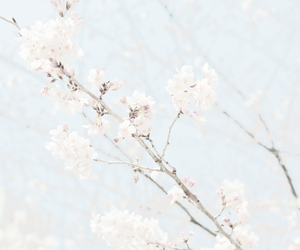 aesthetic, cherry blossom, and summer image