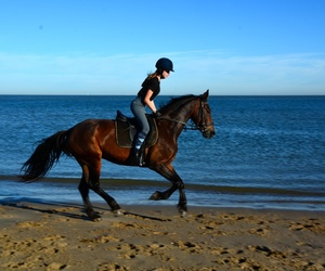 beach, horse, and horse riding image