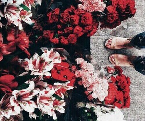 flowers, red, and theme image
