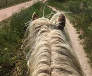 pony and trailride image
