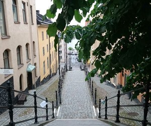 alleyway, stairs, and tree image