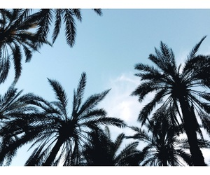 palm trees, skies, and summer image