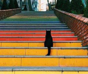 animals, colors, and stairs image