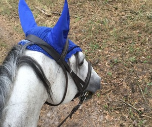 blue, equestrian, and forest image