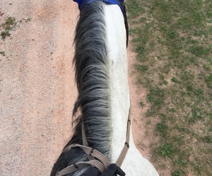 horse, horse riding, and trail ride image