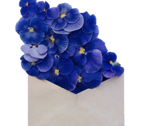 aesthetic, flowers, and png image