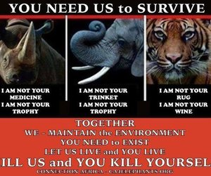 elephant, survive, and tiger image