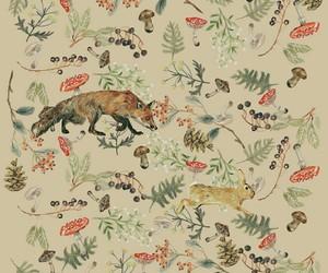 animals, rabbit, and fox image