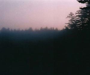 vintage, forest, and grunge image