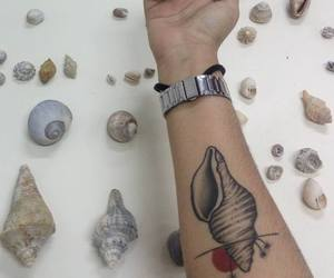 biology, sea, and shell image
