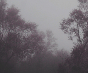 wallpaper, gray, and trees image