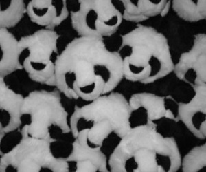 panda and picture image