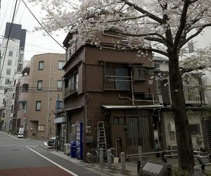 street, cherry blossom, and japan image
