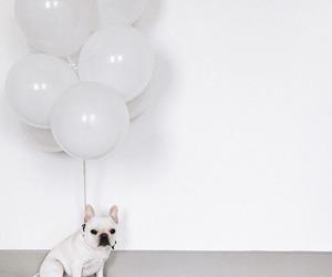 cute, balloon, and pug image