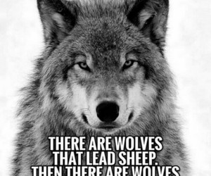 alpha, motivation, and quotes image