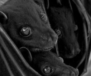bats, dark, and gothic image