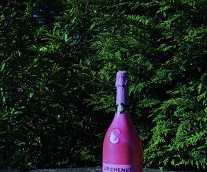 aesthetic, champagne, and forest image