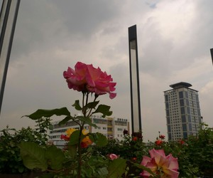 flowers, grunge, and sky image