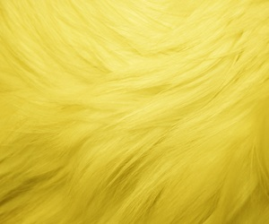 fluff, yellow, and fur image