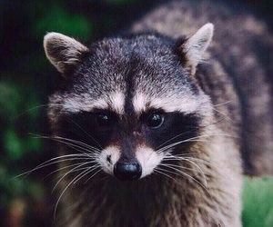 amazing, animals, and cute pet image