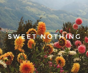 flowers, sweet nothing, and text image