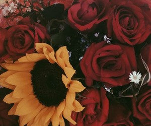 boquet, bunch, and rose image