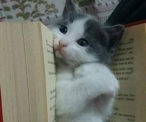 cat, book, and kitty image