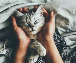 adorable, grey, and kitty image