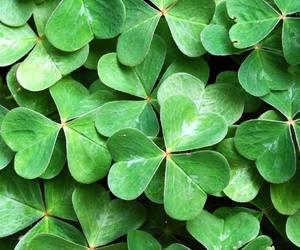 clover, green, and shamrocks image