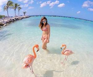 beach, beautiful, and flamingo image