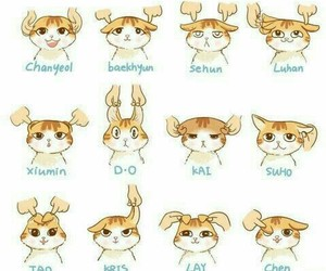 exo, cat, and exo-k image