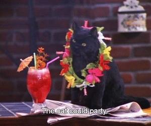 black cat, cat, and sabrina image