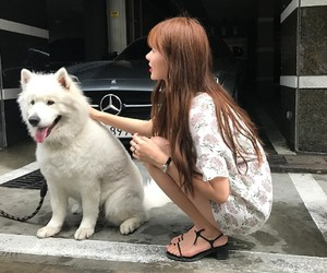 dog, girl, and kfashion image