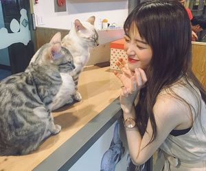 cats, girl, and korean image