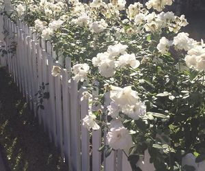 fence, flowers, and flores image