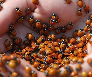 ladybug, hands, and insect image