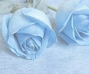 blue, rose, and flowers image