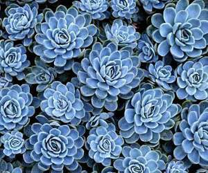 beauty, flowers, and blue image