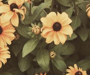 flowers and twitterlayout image
