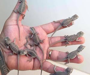 baby animals, cute animals, and lizard image