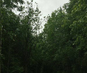 forest, lost, and nature image