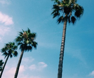 background, blue sky, and palmtrees image