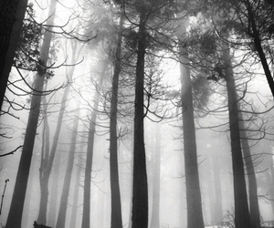 black and white, forest, and nature image