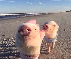 pig, beach, and animal image