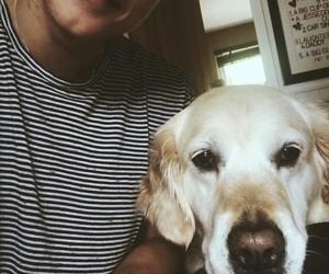 the vamps, brad, and dog image