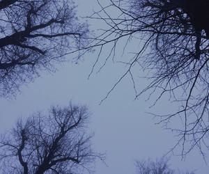 blue, dark, and fog image