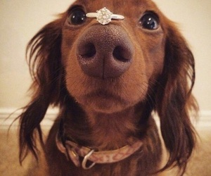 dog, dogs, and ring image