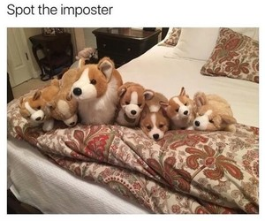adorable, awesome, and funny image